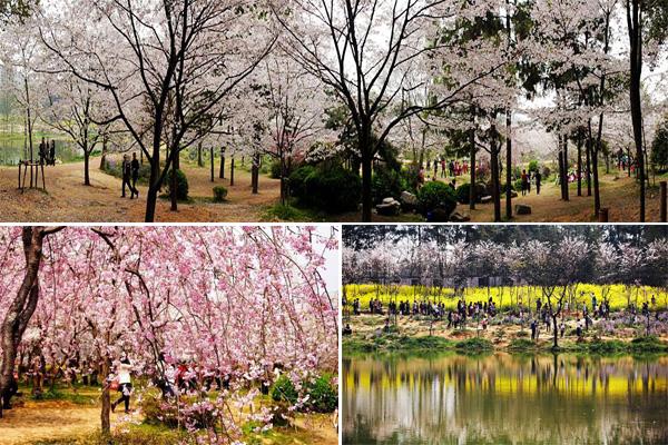 青岛同志海公园
